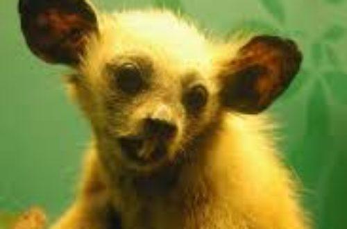 Article : Légendes de Madagascar : les monstres