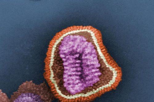 Article : Ces virus qui veulent tuer l'Afrique… et toute l'Humanité
